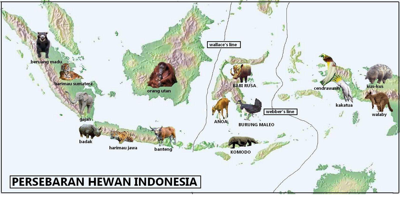 Persebaran Flora & Fauna Di Indonesia —